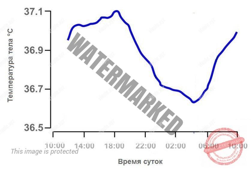 График температуры тела человека